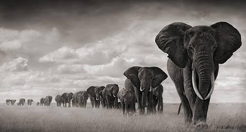 Accueil elephantnoiretblanc1